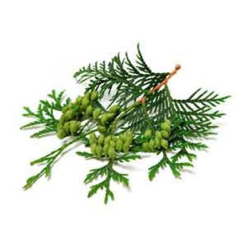 White cedarwood (essence of)