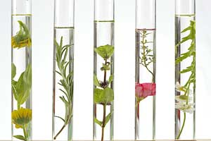 Tube à essaie ingrédients végétaux